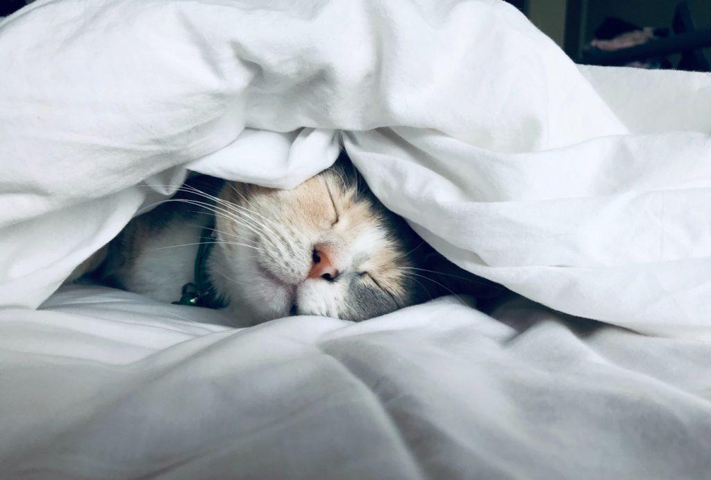 кот спит. фазы сна