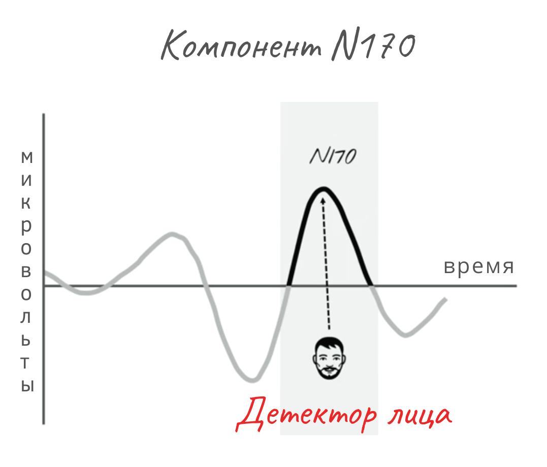 система внимания мозга