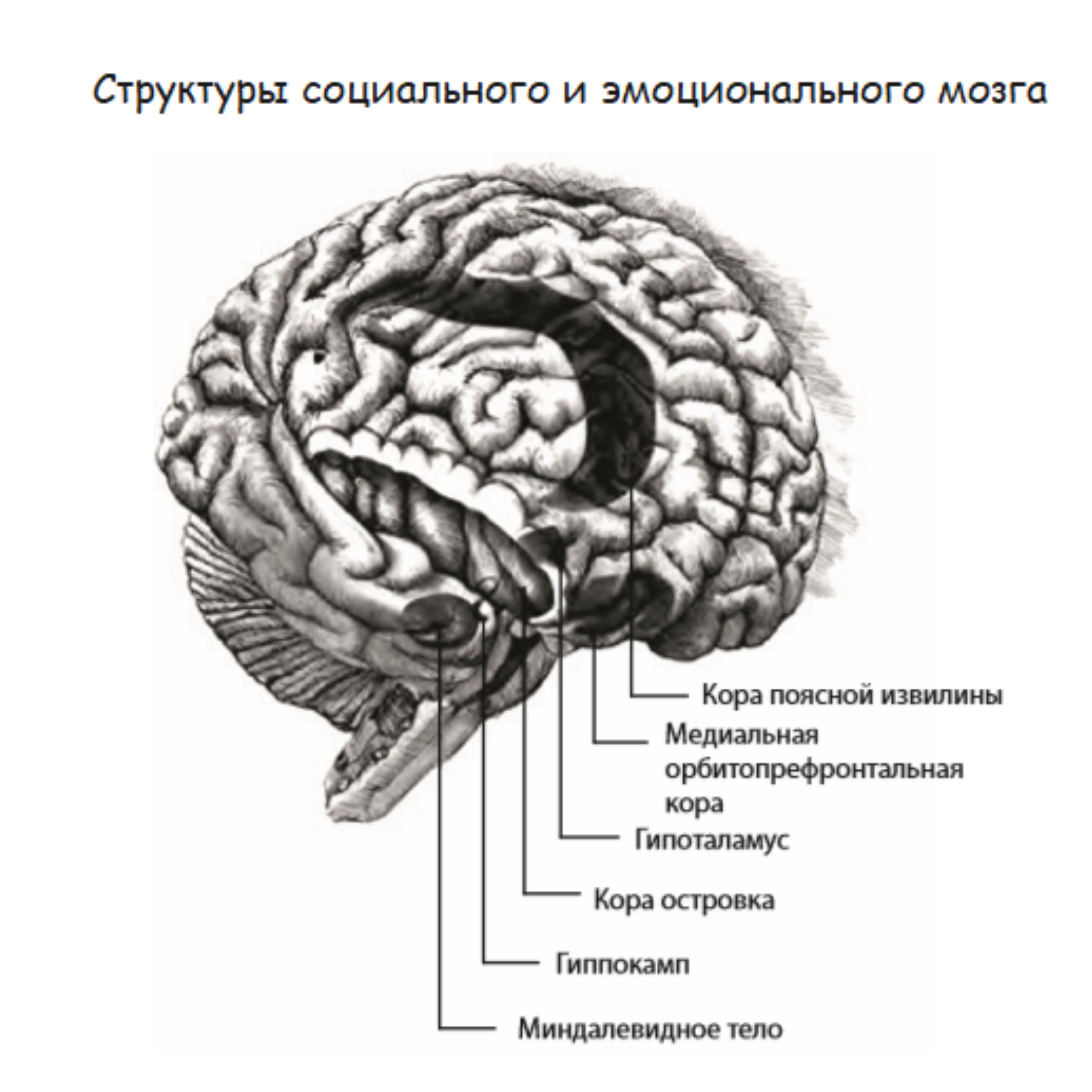 эмоциональный мозг