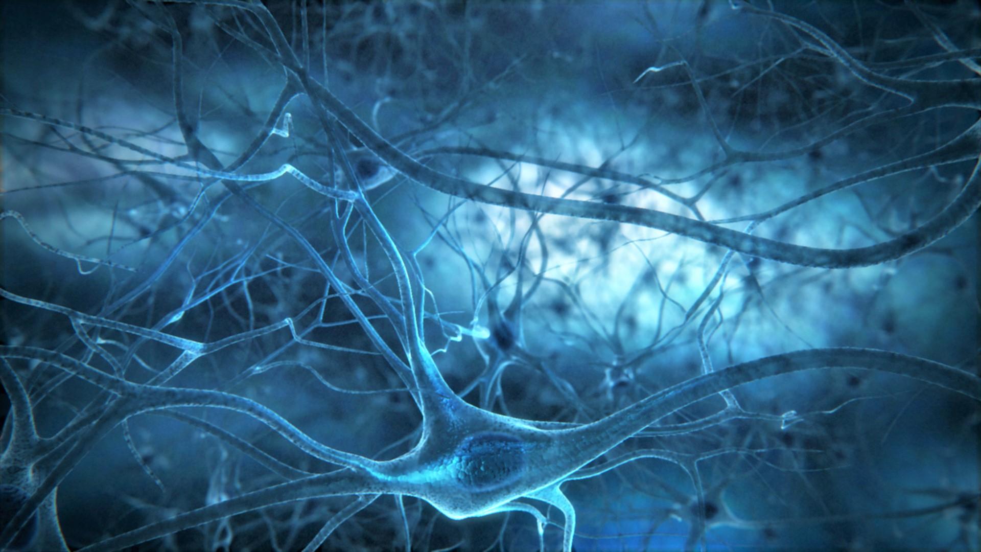медитация и нейронаука